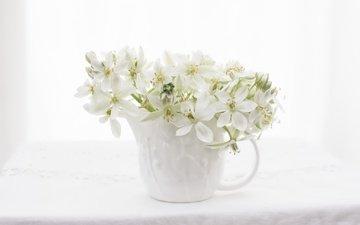 цветы, цветение, фон, цвет, букет, ваза