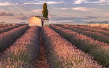 the sky, flowers, clouds, lavender, house, france, provence, plantation, valensole