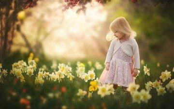 цветы, лето, взгляд, дети, девочка, волосы, лицо, ребенок, нарциссы