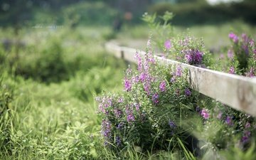 flowers, grass, plants, summer, the fence