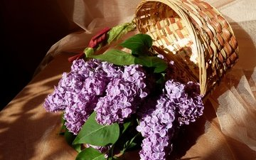 flowers, leaves, branches, basket, lilac