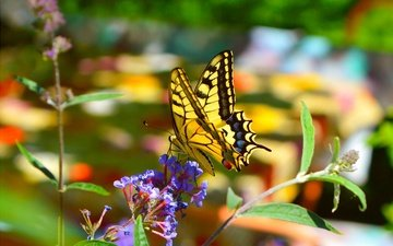 flowers, macro, insect, butterfly, wings, blur, spring, swallowtail