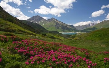 flowers, clouds, lake, mountains, france, alps, sunny, rhododendrons, savoie