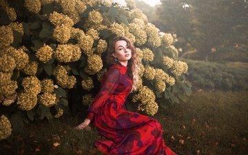 цветы, девушка, платье, взгляд, волосы, лицо, aleah michele, lady laurelle
