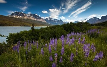 the sky, flowers, clouds, river, mountains, morning, summer