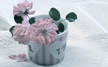 flowers, roses, petals, tablecloth
