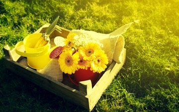 flowers, grass, bouquet, yellow, gerbera, lake, bucket, garden tools