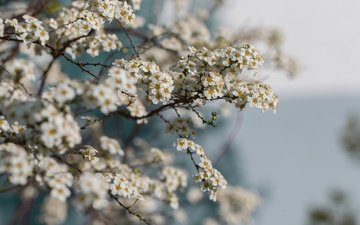 flowers, branches, spring