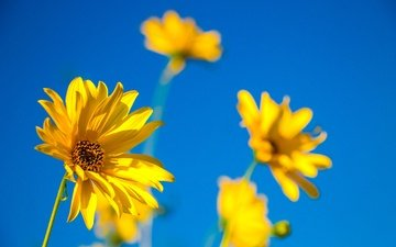 the sky, flowers, petals, stems, yellow flowers