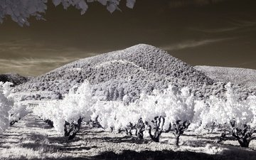 деревья, горы, сад, франция, инфракрасный снимок, вантероль