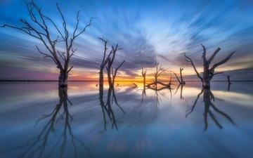 деревья, озеро, отражение, австралия, южная австралия, lake bonney