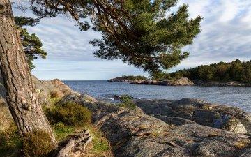 небо, облака, дерево, камни, берег, море