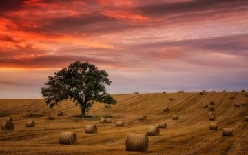 the sky, clouds, tree, sunset, field, horizon, hay, glow, straw