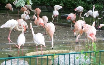 flamingo, birds, beak, feathers, zoo