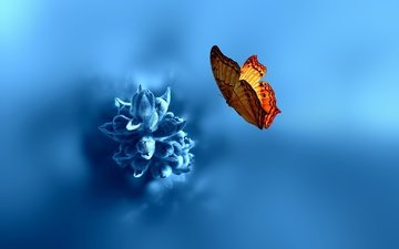 insect, background, flower, butterfly, wings, blur