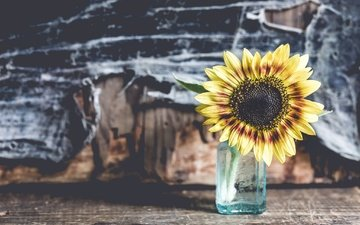 background, flower, petals, sunflower, heart, bank, graydaysandcoffee
