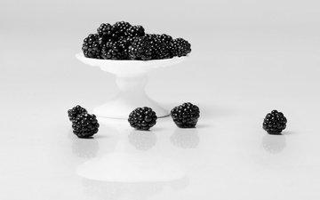 фон, еда, ягоды, белый фон, ежевика