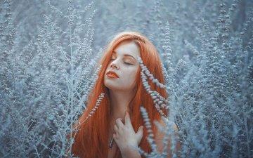 девушка, фон, взгляд, рыжая, волосы, лицо