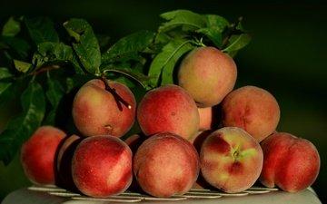 фрукты, урожай, плоды, персики