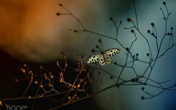 insect, branches, butterfly, wings, plant, eleonora di primo