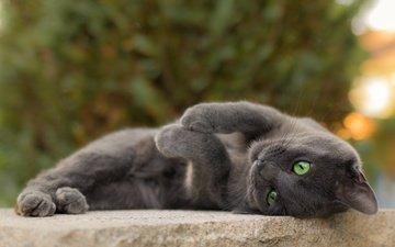 cat, muzzle, mustache, look, grey, green eyes