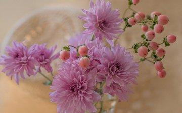 цветы, лепестки, букет, хризантемы, хризантема