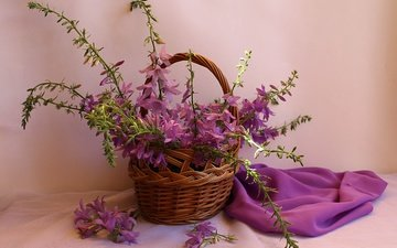 flowers, summer, basket, bells, wildflowers, still life