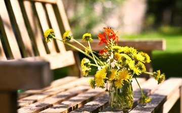 flowers, summer, chamomile, bench, dandelions, bank