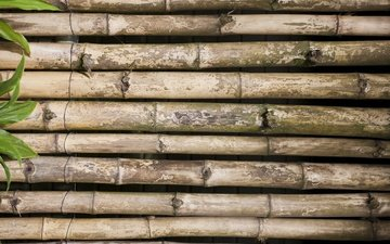 leaves, background, bamboo
