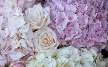 цветы, макро, розы, лепестки, гортензия