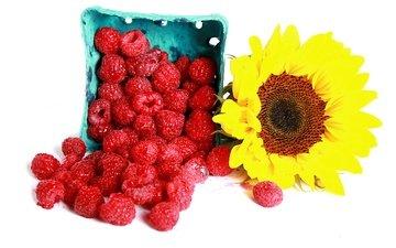 цветок, малина, подсолнух, ягоды, белый фон