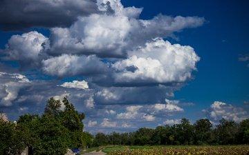 небо, облака, деревья, природа
