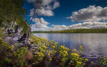the sky, flowers, clouds, lake, forest, finland, hossa national park