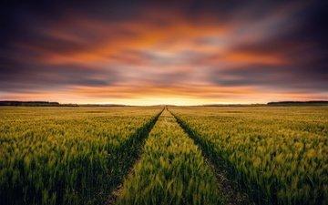 небо, закат, поле, горизонт, колосья, пшеница