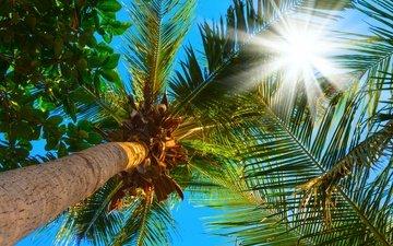 небо, солнце, листья, ветки, пальмы, верхушки