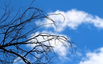 the sky, clouds, tree, branches, deadwood