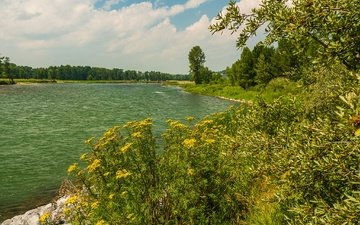 clouds, trees, river, shore, greens, forest, the bushes, summer, canada, alberta, bow river
