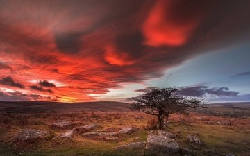 clouds, tree, stones, england, glow, dartmoor, devon