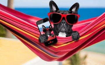 очки, собака, отдых, юмор, гамак, телефон, бульдог, селфи, французский бульдог
