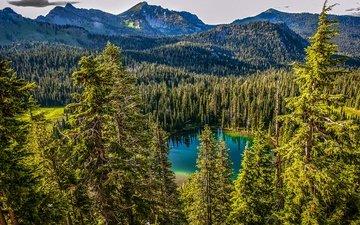 деревья, озеро, горы, лес, канада, mt. rainier national park