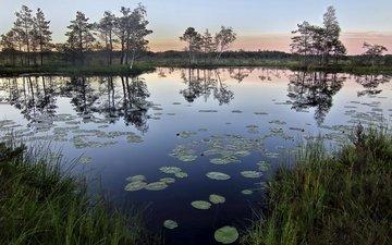 grass, trees, lake, nature, reflection, morning, horizon