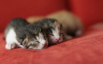 усы, сон, коты, пара, кошки, малыши, мордочки