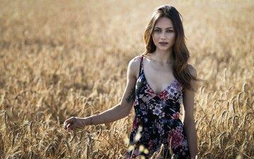 девушка, платье, поле, взгляд, модель, колосья, пшеница, волосы, лицо, erika