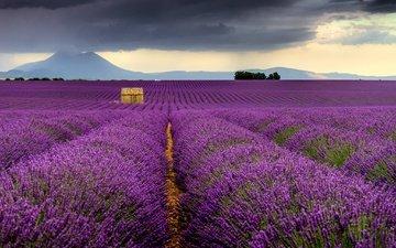 цветы, поле, лаванда, дом, франция, provence-alpes-côte d'azur, валансоль