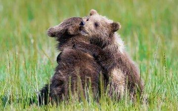 трава, природа, лето, игра, медведи, медвежата