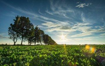 the sky, clouds, trees, the sun, nature, plants, landscape, field, horizon