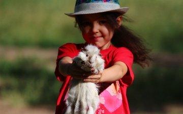 взгляд, девочка, ребенок, животное, шляпа, морская свинка