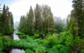 trees, river, nature, plants, forest