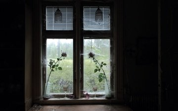 flowers, roses, room, window, web