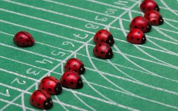 the situation, ladybugs, the race